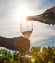 alexandre-penet-champagne-vines
